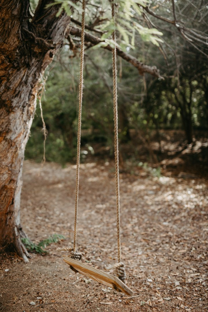 Swing Tree Nature Natural environment Forest Woodland Branch Leaf Wood Woody plant Plant Trunk Grass Grass family Organism Twig Adaptation Outdoor play equipment Jungle Landscape Soil State park Wildlife Old-growth forest Rock Rope Plant stem