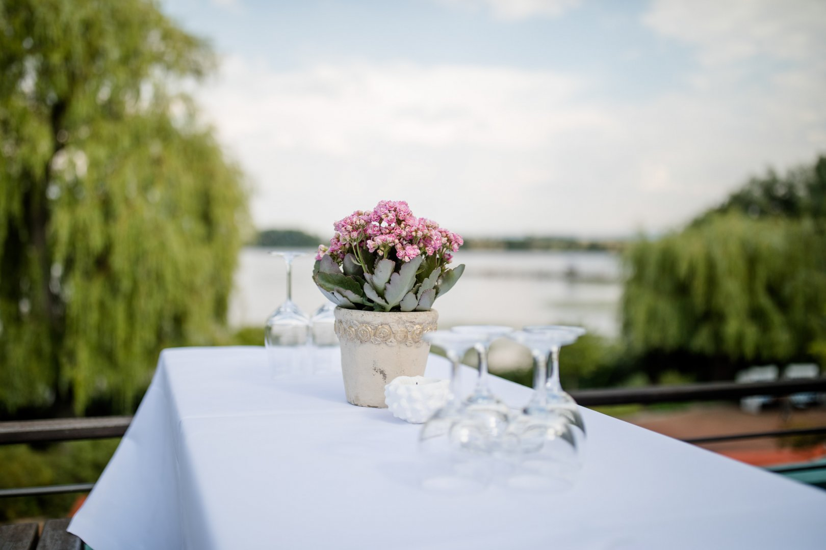 Photograph Flower Pink Table Centrepiece Floral design Flower Arranging Plant Bouquet Floristry Event Tablecloth Ceremony Tableware Rehearsal dinner Furniture Wedding Hydrangea Petal Backyard Wildflower Party Restaurant