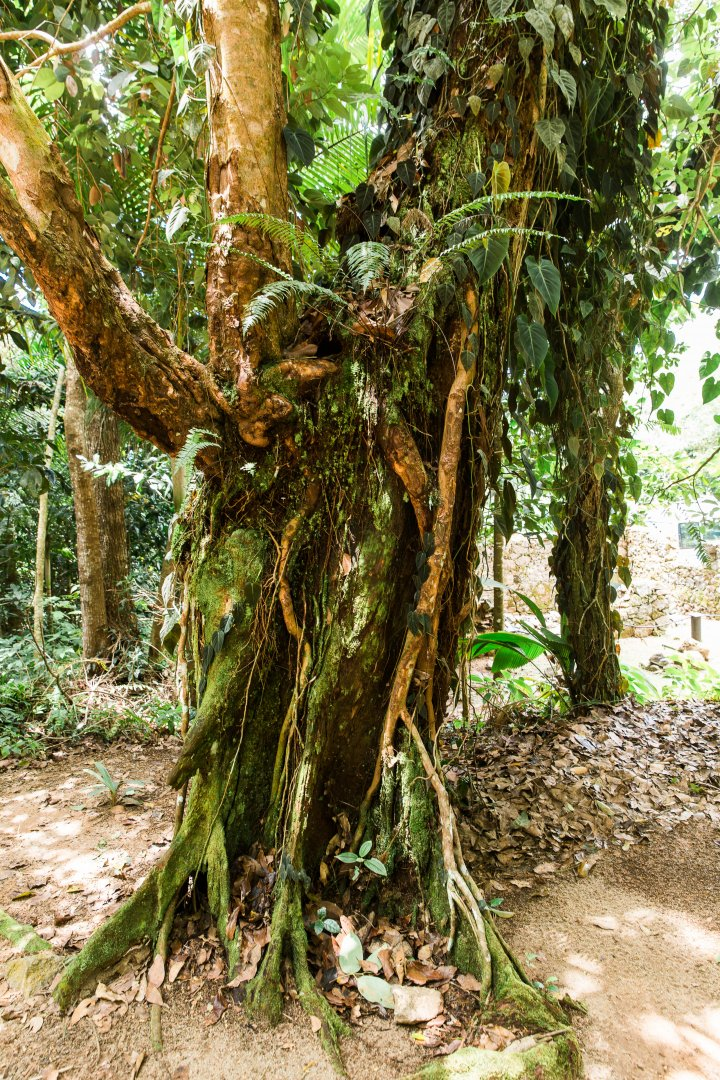 Tree Plant Terrestrial plant Trunk Woody plant Botany Forest Root Jungle Old-growth forest Rainforest Vascular plant Valdivian temperate rain forest Adaptation Woodland Plant stem Tropical and subtropical coniferous forests