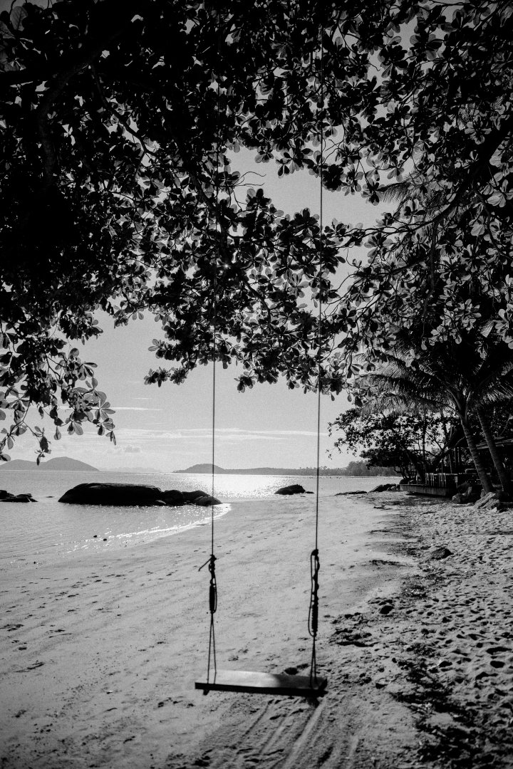 White Black-and-white Black Water Monochrome photography Nature Tree Monochrome Sky Photography Sea Woody plant Shore Stock photography Landscape River Plant Street light Cloud Lake Style Bank Vacation Coast Forest