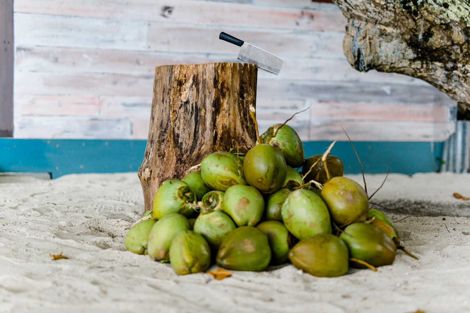 Natural foods Plant Coconut Fruit Local food Food Tree Produce Still life photography
