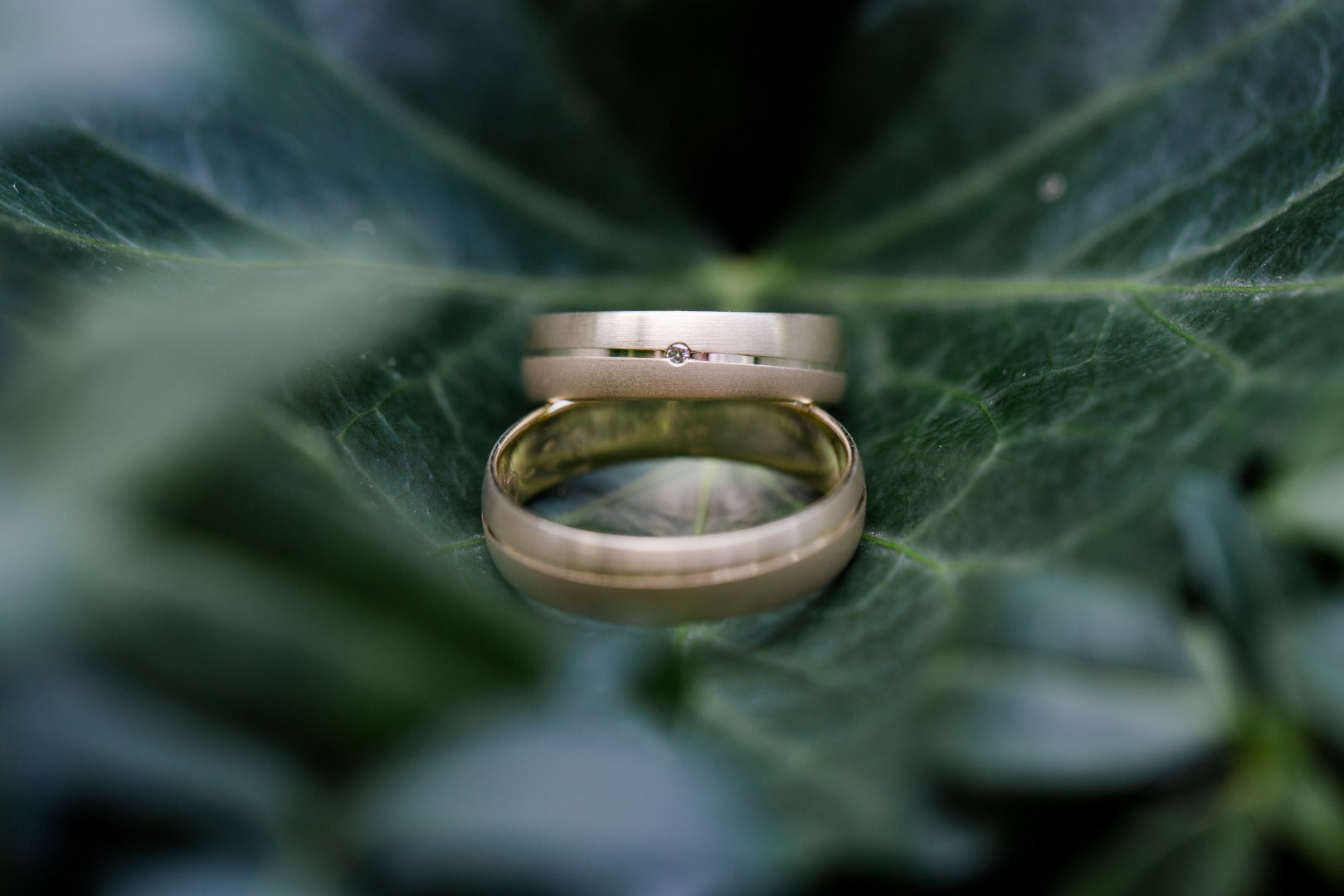 Green Wedding ceremony supply Ring Macro photography Wedding ring Fashion accessory Close-up Leaf Jewellery Photography Stock photography Still life photography Engagement ring Circle Metal