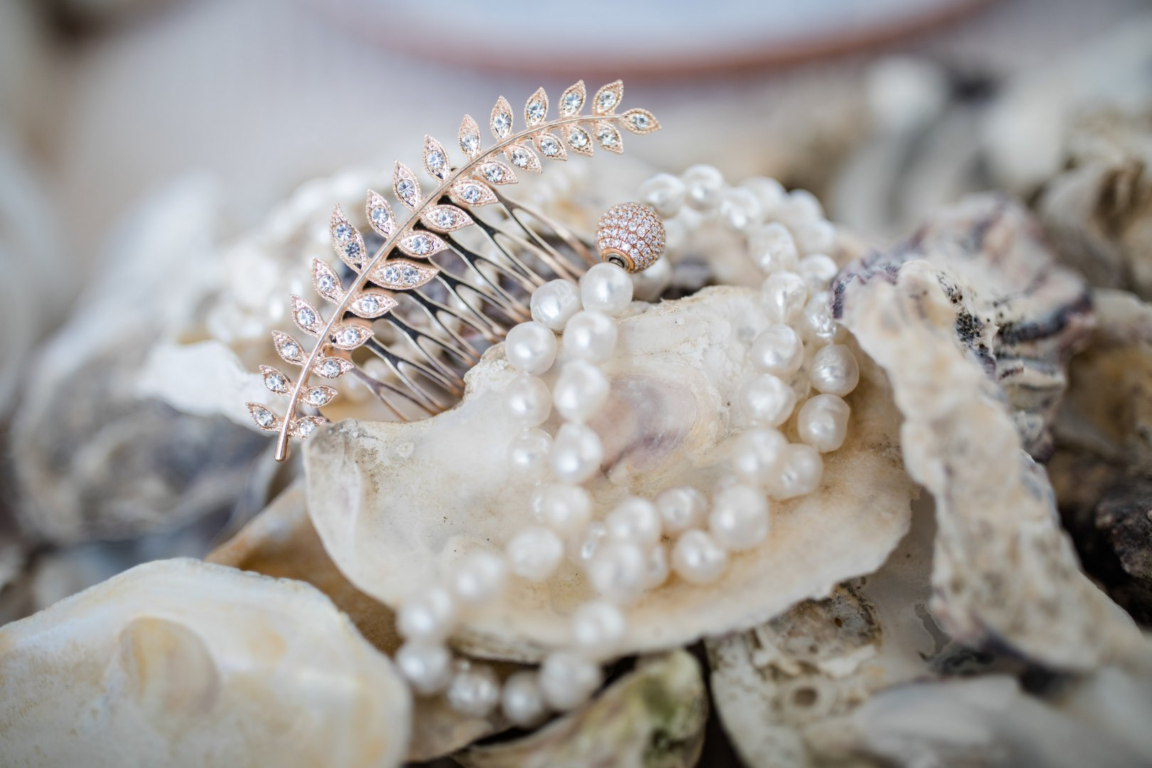 Shell Pearl Natural material Conch Cockle